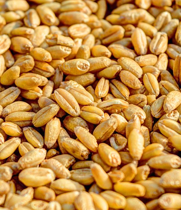 Экспорт украинских аграрных и пищевых товаров составил около $18 млрд