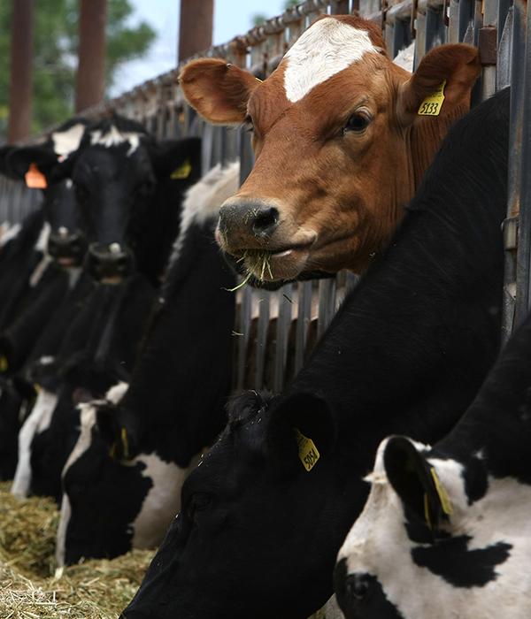 Гройсман пообещал помочь мясо-молочной отрасли и садоводам