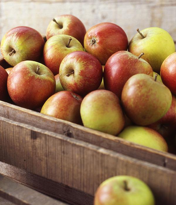 Рынок яблок: внешний и внутренний