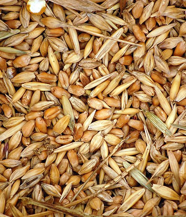 С начала маркетингового года экспортировано 22,4 млн тонн зерновых