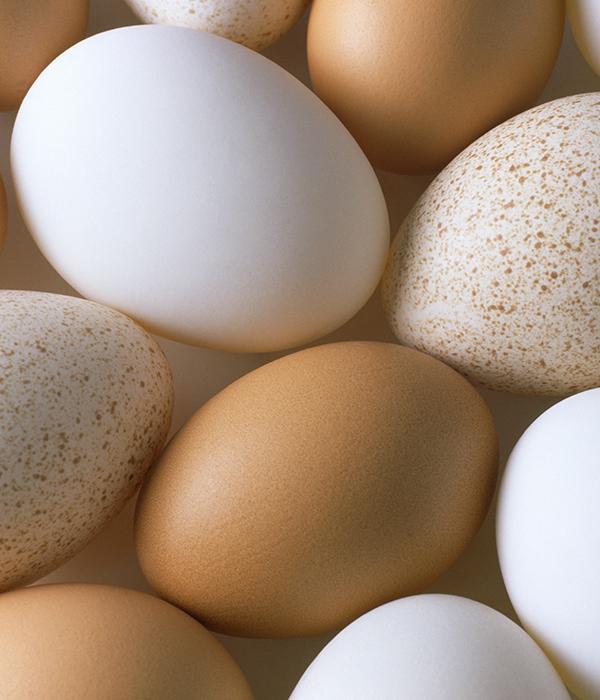 Украинские сельхозпредприятия произвели свыше 15 млрд штук яиц