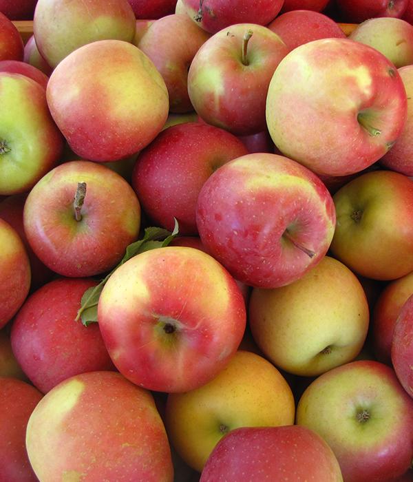 В 2018 году будет рекордный яблочный урожай