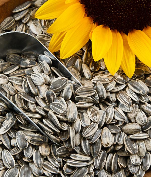 По итогам 2017 года импорт семенного материала зерновых и масличных значительно вырос