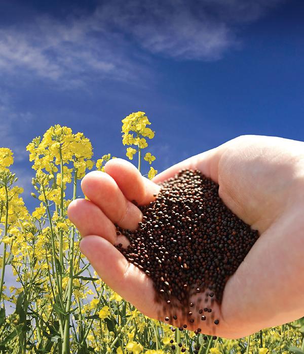 Украина отправила на внешние рынки около 4 млн тонн масличных