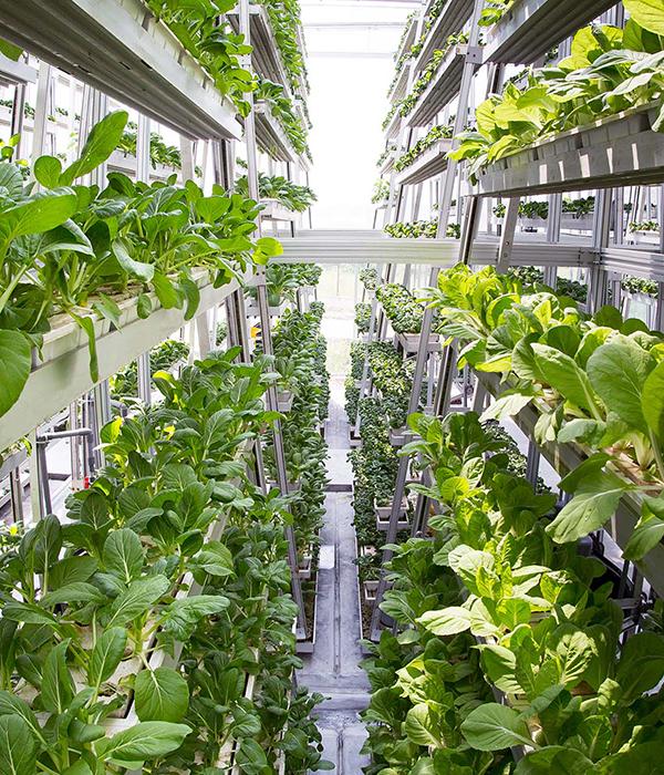 В Китае построят 300 вертикальных ферм