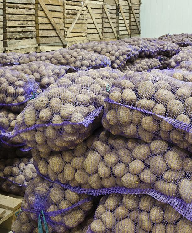 Хлорпрофам снижает урожайность картофеля