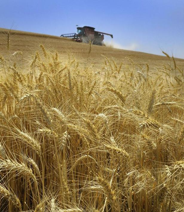 Показатели валовой продукции растениеводства сохранятся на прежнем уровне