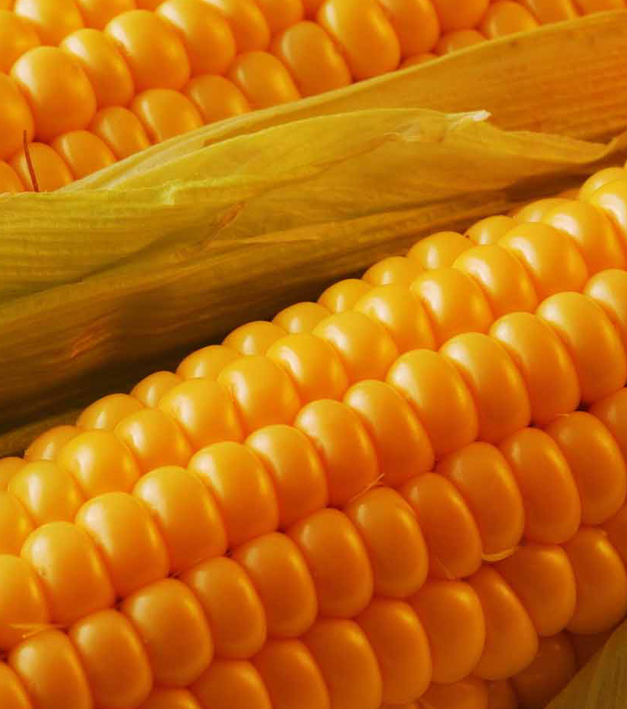 Кукуруза: первый миллион, запасы, цены, экспорт