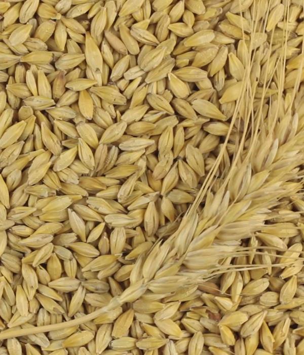Стали известны данные по внешним поставкам зерновых