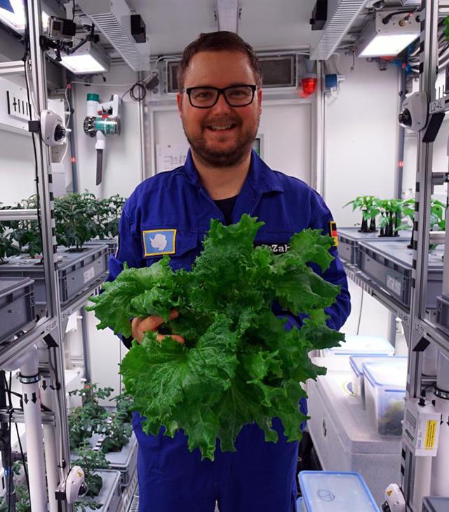 В Антарктиде вырастили первый урожай овощей (ФОТО)