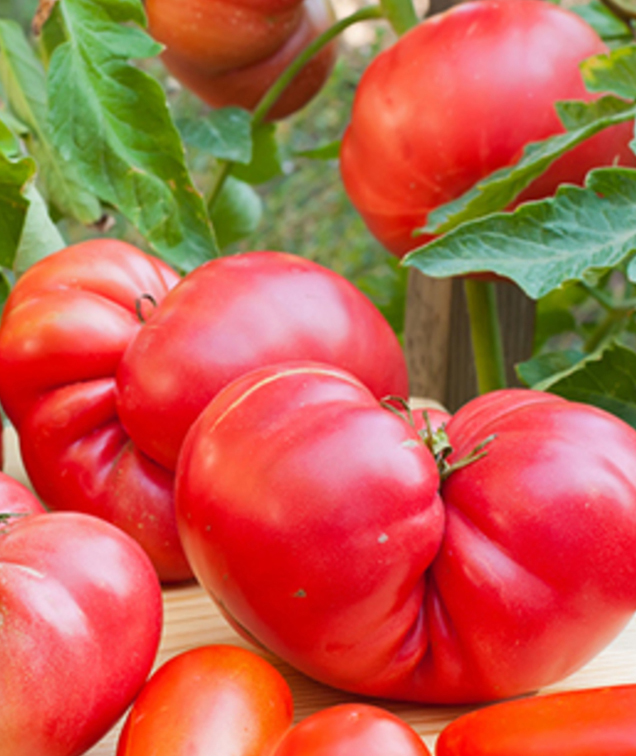 В Австралии возьмутся за отбракованные овощи