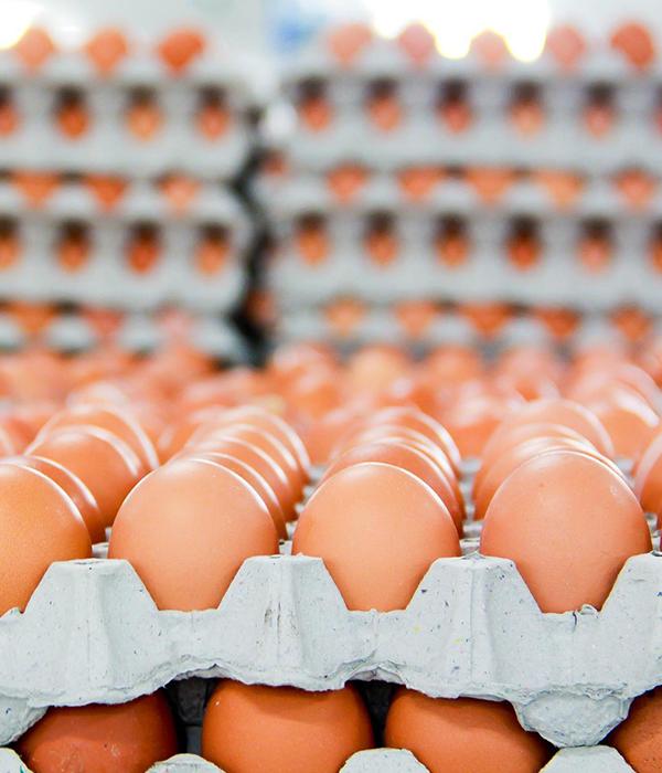 Яйца: экспорт, импорт, производство, внутренний рынок