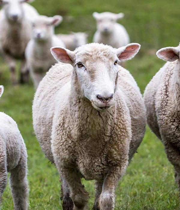 Госстат распространил информацию о поголовье домашних животных