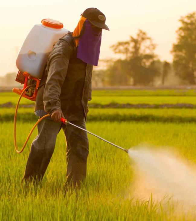 Китайские ученые разработали эффективный и недорогой пестицид