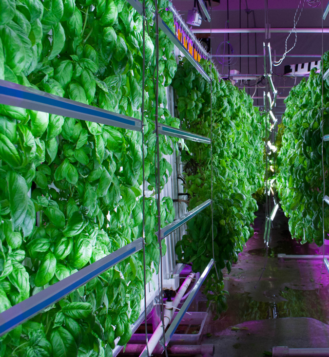 Органические светодиоды повышают производительность вертикальных ферм на 20%