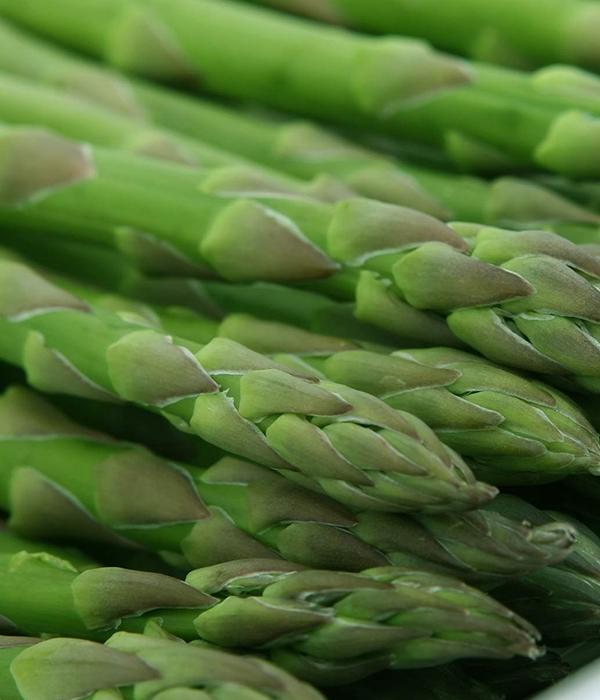 Ученые из Канады вывели новые жароустойчивые высокоурожайные гибриды спаржи