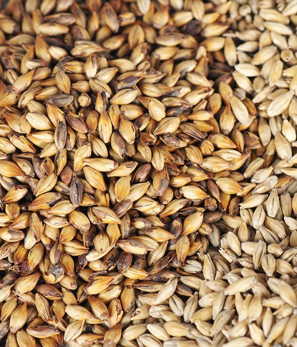 Украина отправила на внешние рынки десятки миллионов тонн зерновых