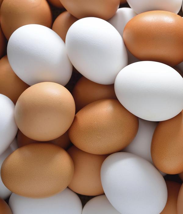 Украинские яйца активно скупают Катар, Ирак и ОАЭ