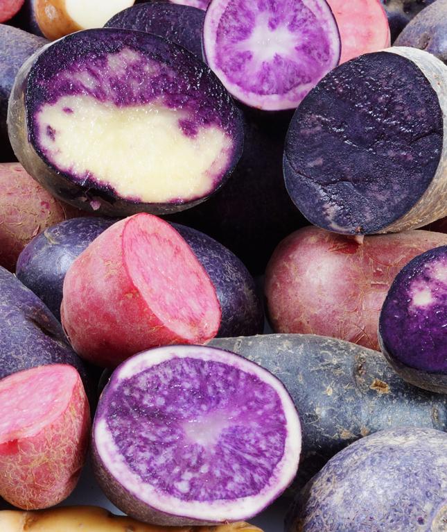 Голландская компания представила новые сорта картофеля на любой вкус