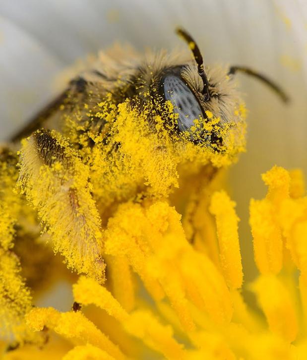 Неоникотиноидные инсектициды негативно влияют на здоровье насекомых-опылителей