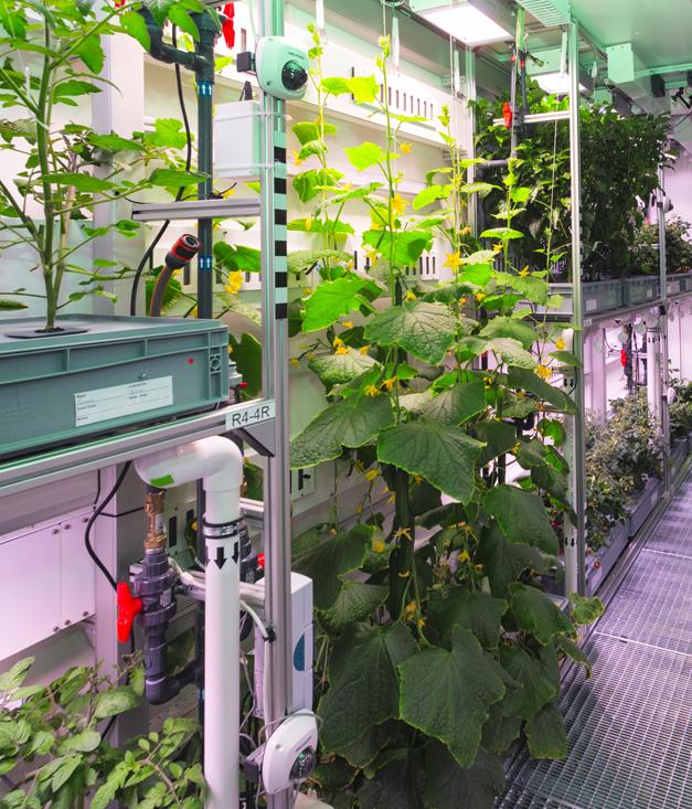 Урожай овощей в Антарктиде повышает шансы успешного выращивания зелени на Марсе и Луне