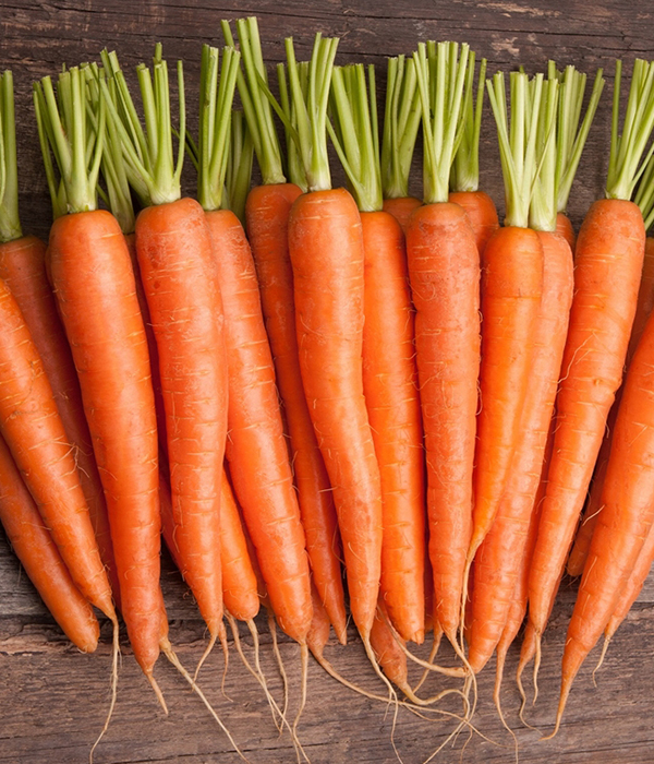 Золотая морковь, или подарок «борщевикам»