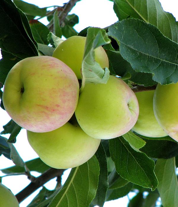 Аграриям выплатят свыше 72 млн грн компенсации