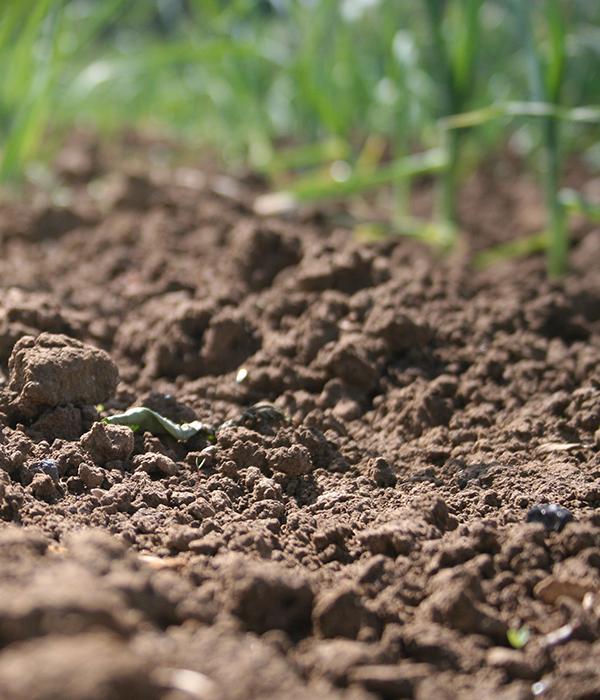 Консультант Всемирного банка рассказал об истощении почв в Украине