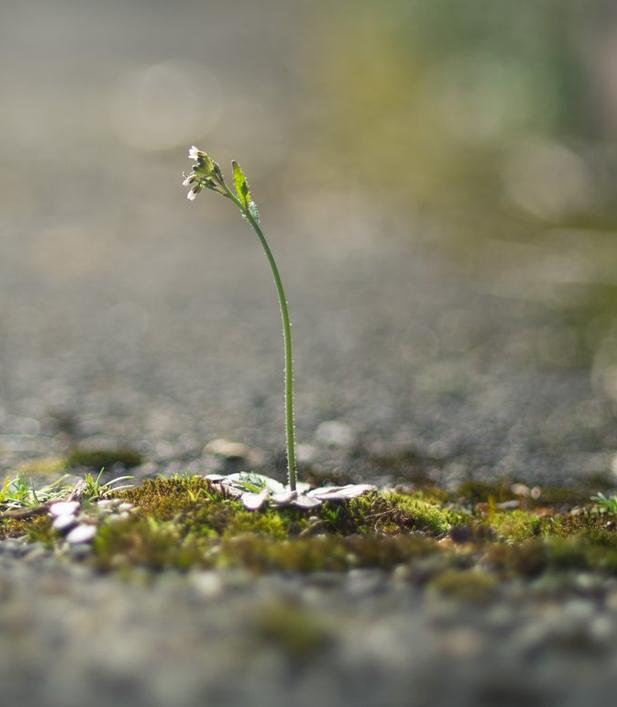 Ученые обнаружили натуральный гербицид нового типа