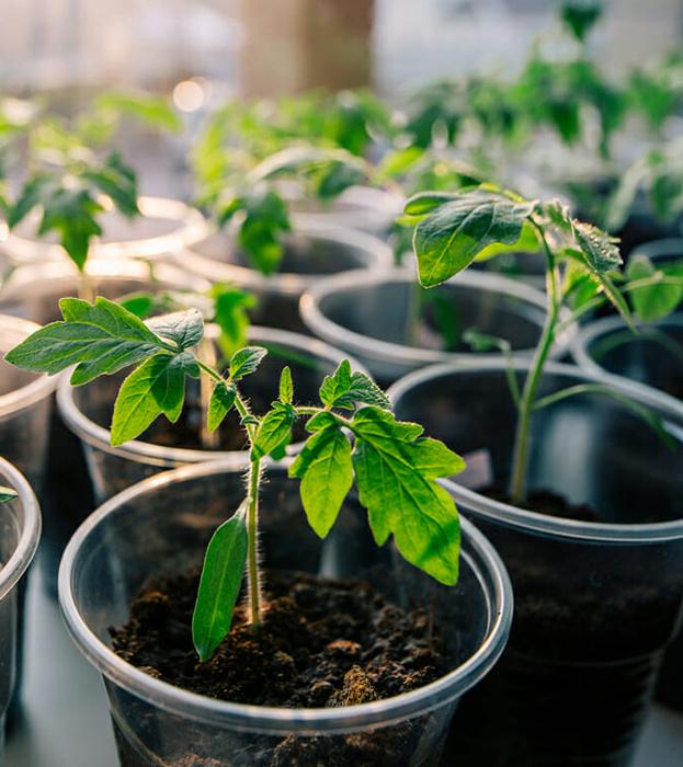 Ученые: удобрение снижает защитные механизмы растений