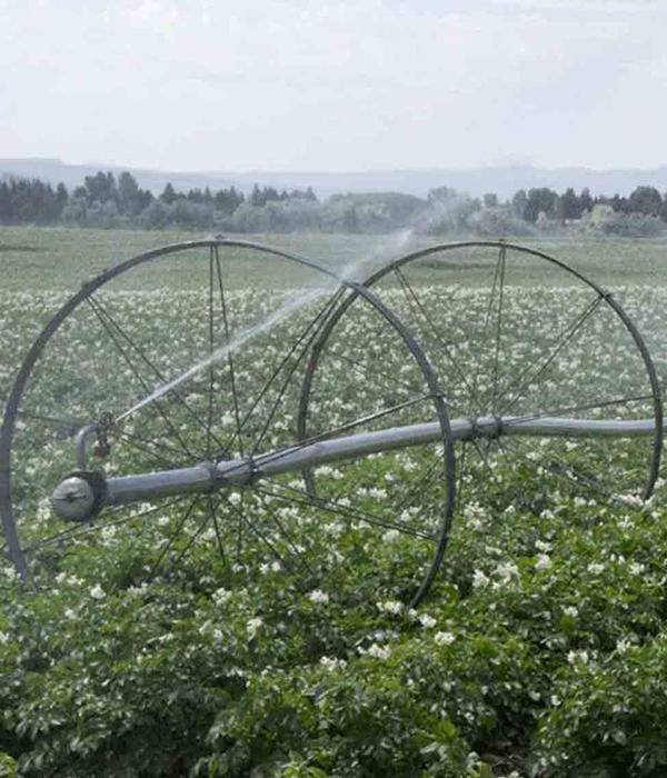 В Ирландии пришли к орошению картофеля