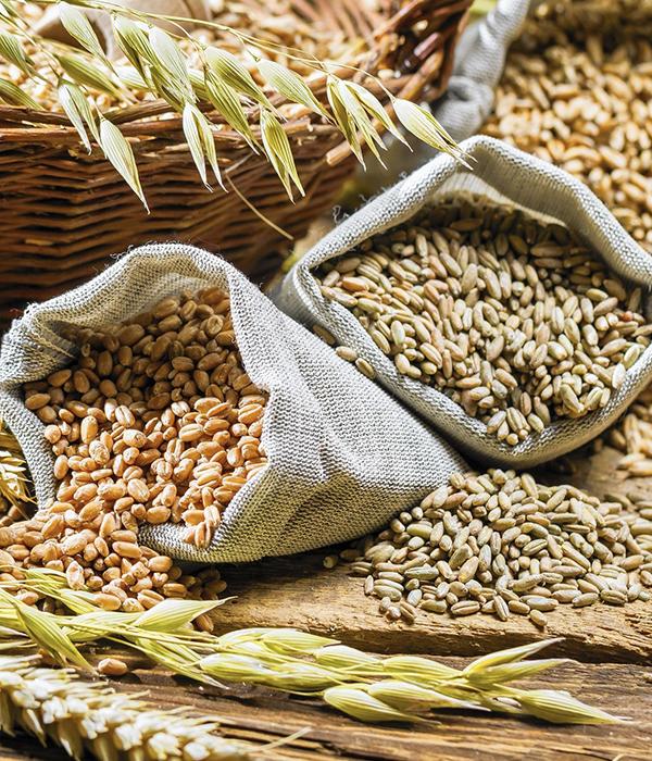 Ведомства распространили новые данные по экспорту зерновых