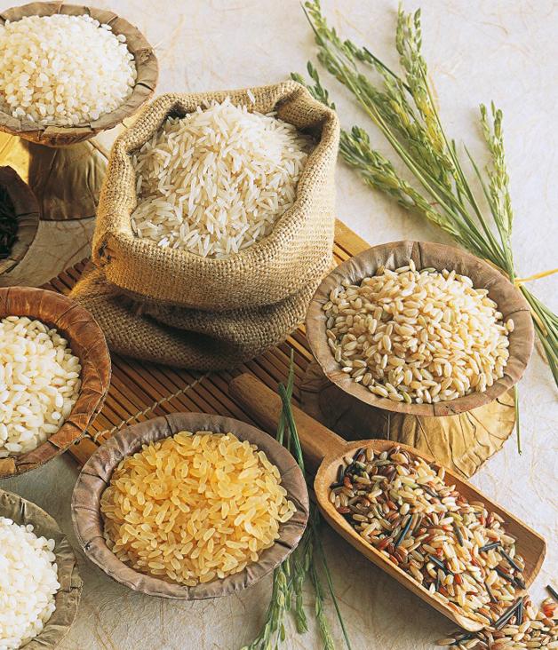 Ученые работают над созданием новых устойчивых сортов риса