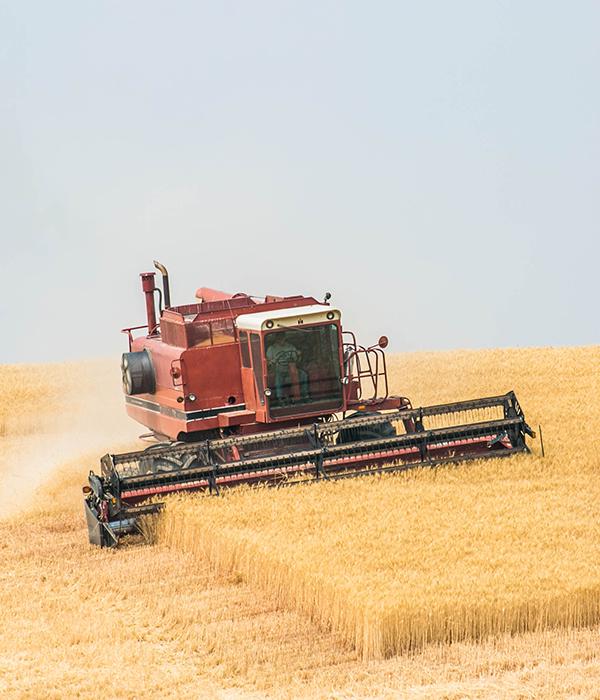 В Украине собрали свыше 24 млн тонн зерновых и зернобобовых