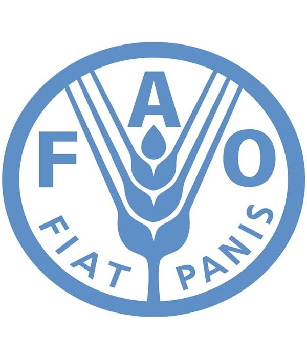 ФАО уменьшила прогноз мирового производства пшеницы