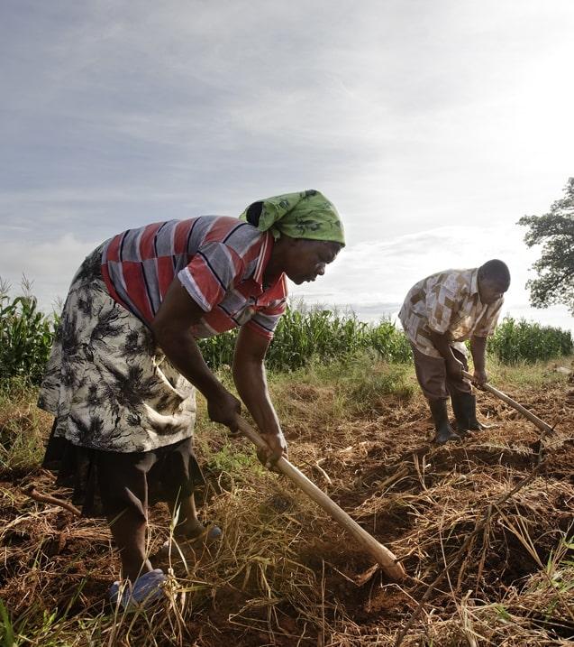 Изменения климата и конфликты заметно усиливают продовольственный дефицит