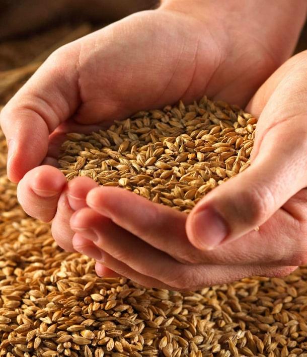 На экспорте зерна Украина уже с начала года заработала миллиарды долларов