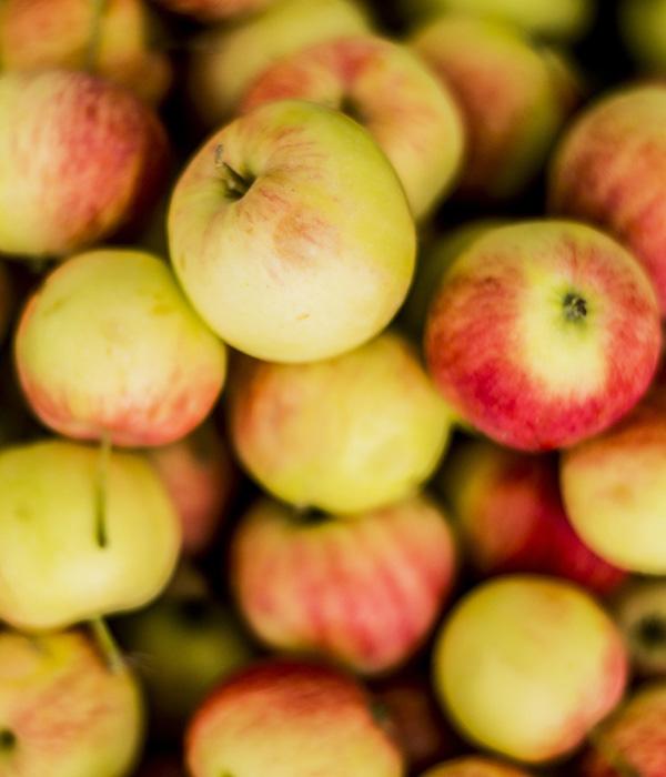 Рекордный урожай яблок стал грандиозной проблемой (эксклюзив)