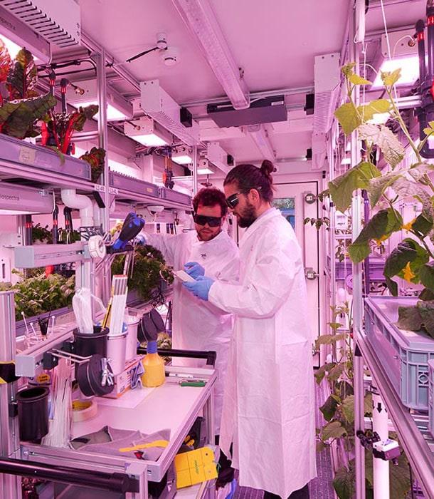 В антарктической теплице собрали рекордный урожай овощей и зелени