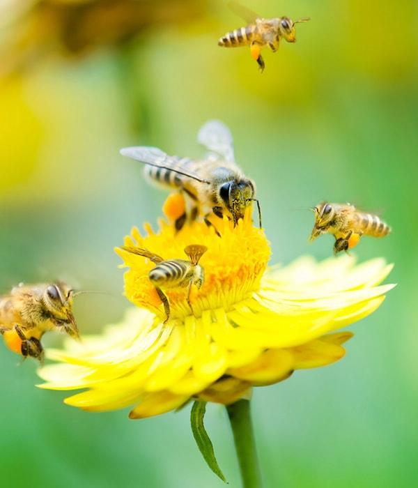 Во Франции запретили использовать пять неоникотиноидных инсектицидов