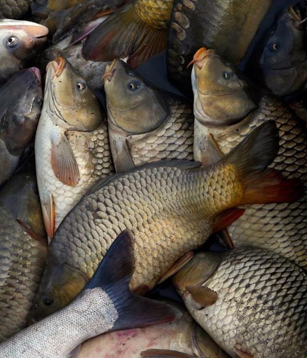 ФАО содействует в гармонизации с евростандартами украинской системы безопасности для рыбной продукции