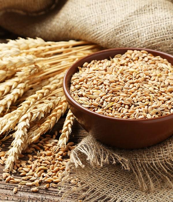 Украинскую пшеницу станут оценивать по международным стандартам