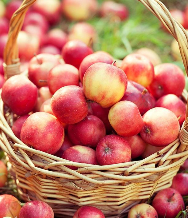 Аналитика последствий ценового спада на яблоки