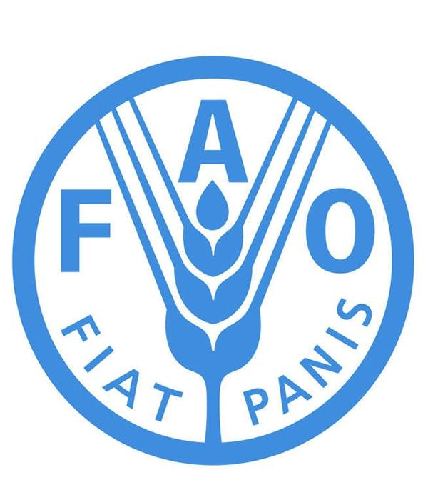 ФАО пересмотрела прогноз по мировому производству зерновых