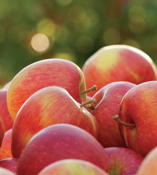 Профицит яблок не удовлетворяет запросы азиатских импортеров