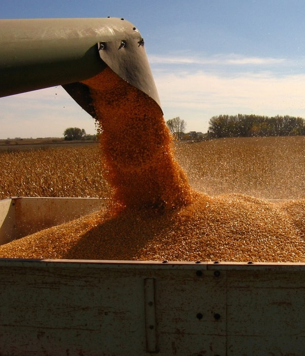 Зерно: внешние поставки