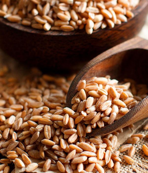 На внешние рынки отправлено 70% прогнозированного объема зерна