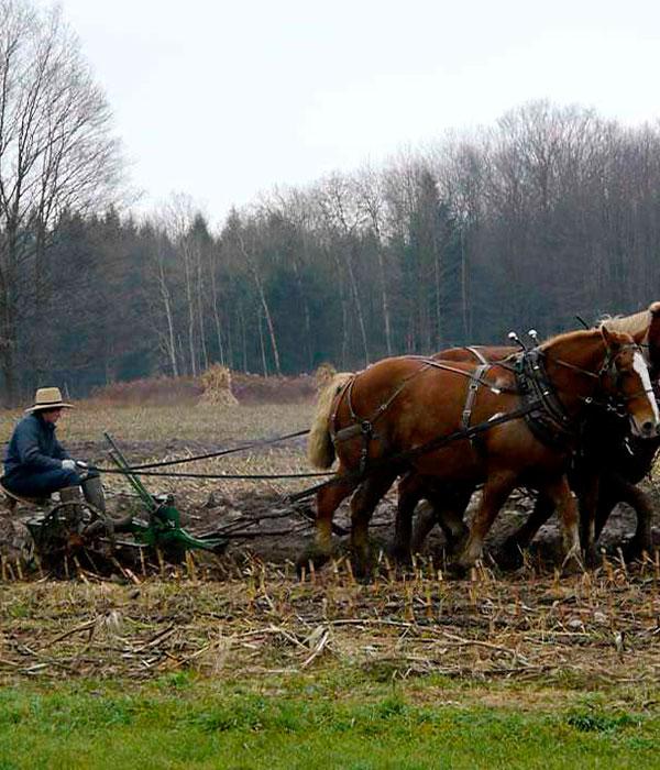 Амиши: вперед в прошлое (ФОТО)