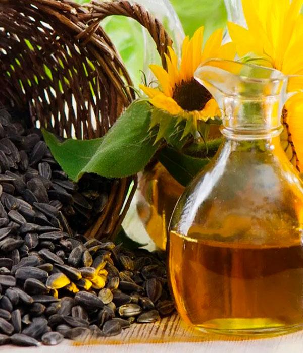 Экспорт и производство масличных культур