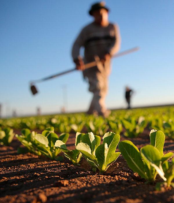 Правительство усовершенствовало механизм поддержки аграриев